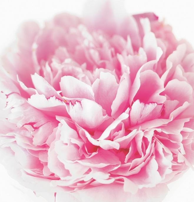 PALE PINK PEONY CARD