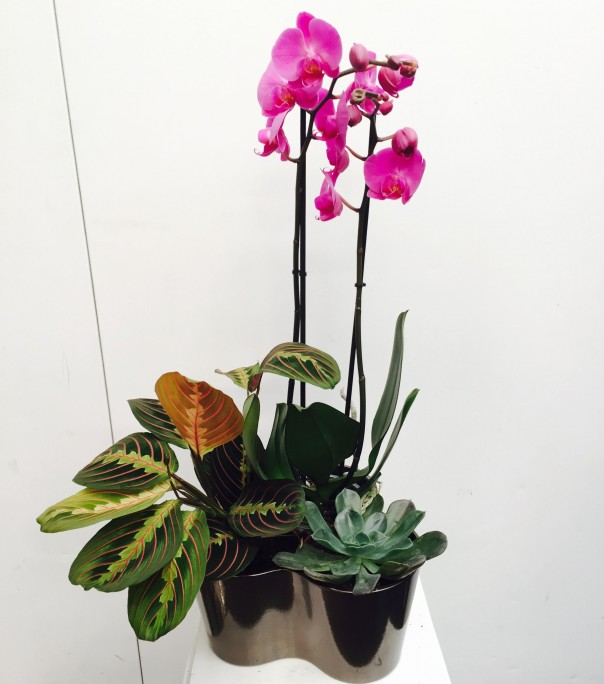 Luxury arrangement trio of plants