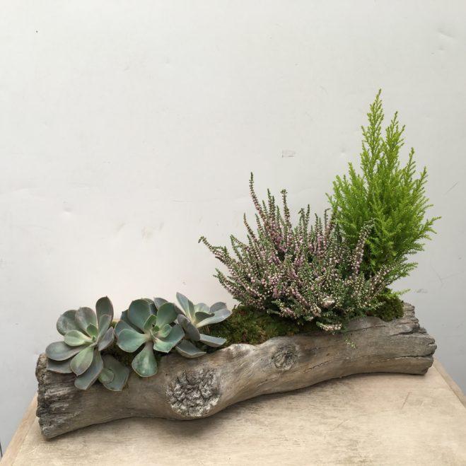 IMG_9185 Log planter £57.50