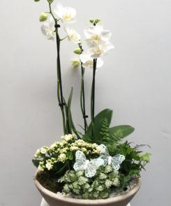 orchid-planter-45-00