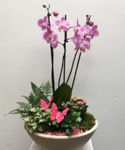 orchid-planter-45-00-pink