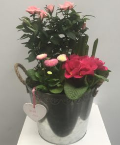 Zinc bucket spring planter