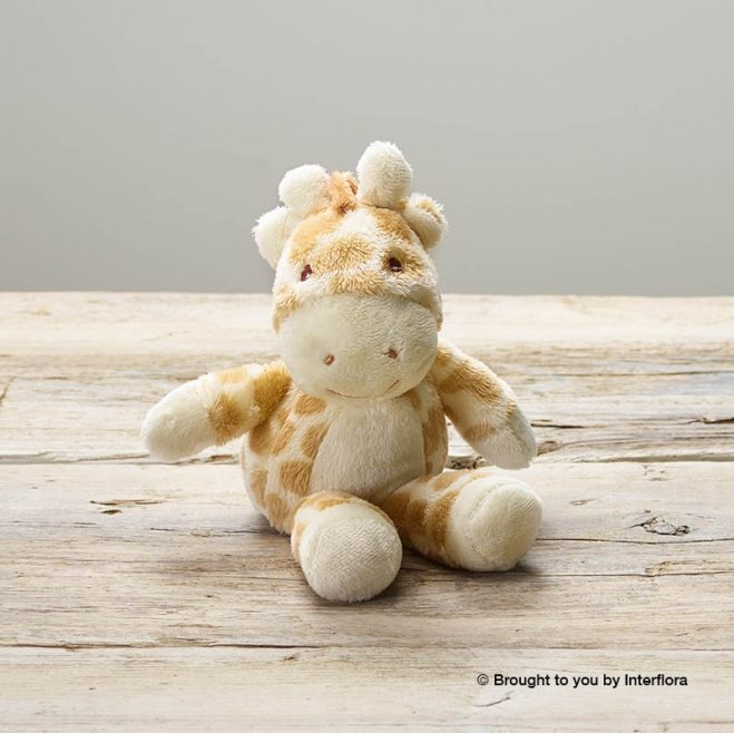 lg_null-gigi-giraffe